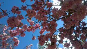 prema yoga blossoms